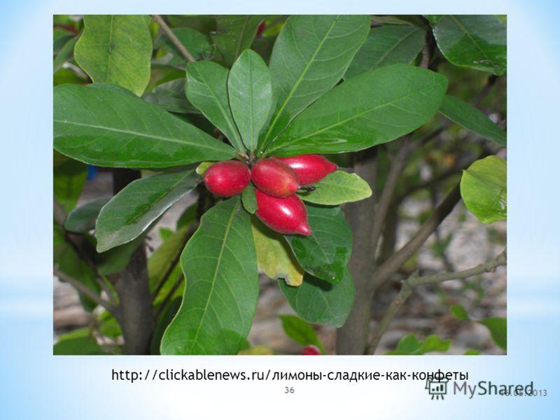 16.05.2013 36 http://clickablenews.ru/лимоны-сладкие-как-конфеты