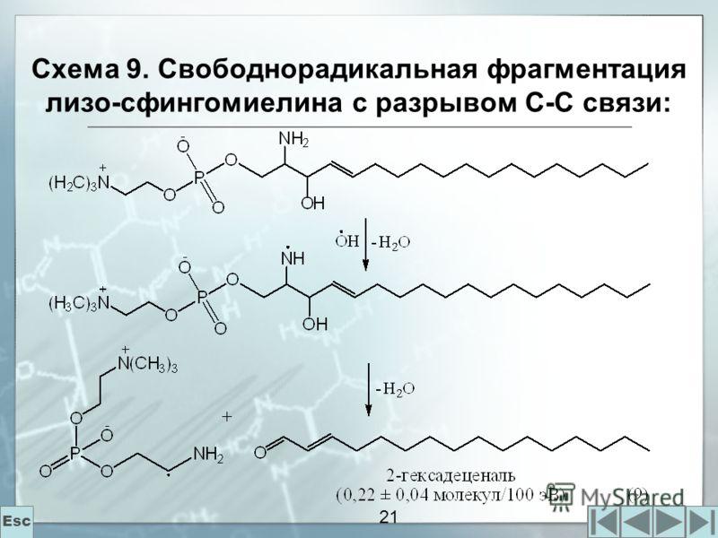 21 Схема 9. Свободнорадикальная фрагментация лизо-сфингомиелина с разрывом С-С связи: Esc