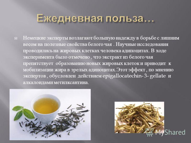 Немецкие эксперты возлагают большую надежду в борьбе с лишним весом на полезные свойства белого чая. Научные исследования проводились на жировых клетках человека адипоцитах. В ходе эксперимента было отмечено, что экстракт из белого чая препятствует о