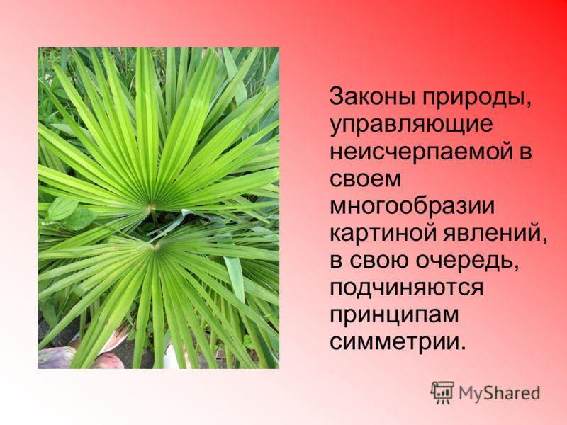 Законы природы, управляющие неисчерпаемой в своем многообразии картиной явлений, в свою очередь, подчиняются принципам симметрии.