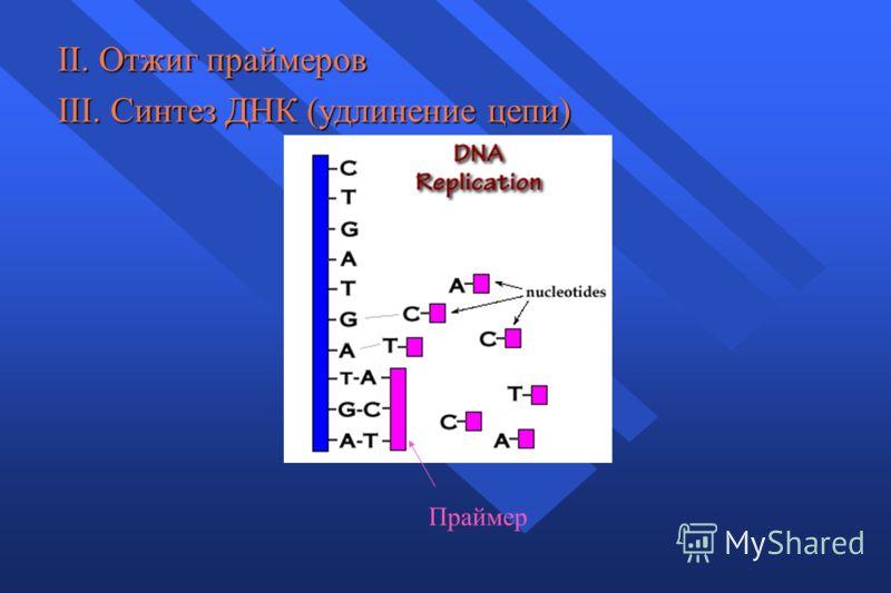 II. Отжиг праймеров III. Синтез ДНК (удлинение цепи) Праймер