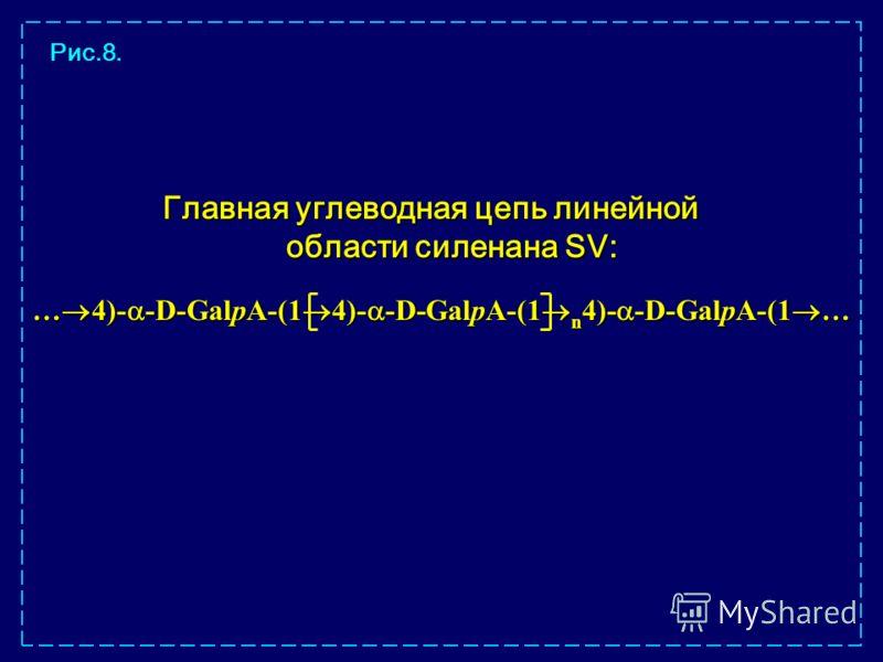Главная углеводная цепь линейной области силенана SV: … 4)- -D-GalpA-(1 4)- -D-GalpA-(1 n 4)- -D-GalpA-(1 … Рис.8.