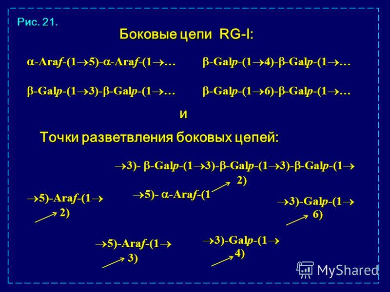 3)-Galp-(1 3)-Galp-(1 5)-Araf-(1 5)-Araf-(1 2) 2) 5)-Araf-(1 5)-Araf-(1 3) 3) 3)- -Galp-(1 3)- -Galp-(1 3)- -Galp-(1 3)- -Galp-(1 3)- -Galp-(1 3)- -Galp-(1 2) 2) 5)- -Araf-(1 5)- -Araf-(1 6) Точки разветвления боковых цепей: 4) -Araf-(1 5)- -Araf-(1