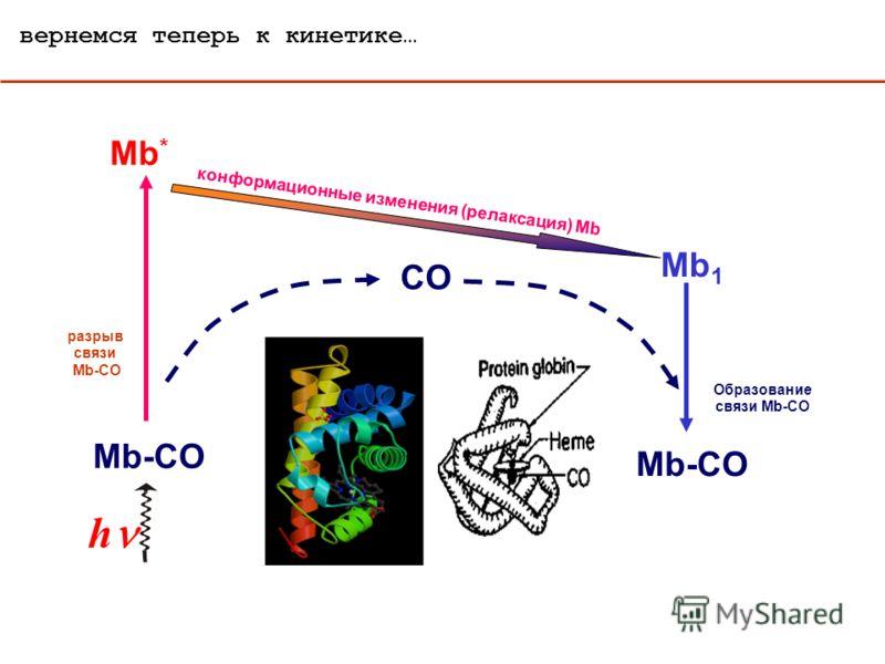 вернемся теперь к кинетике… Mb-CO Образование связи Mb-CO h Mb-CO CO разрыв связи Mb-CO Mb * конформационные изменения (релаксация) Mb Mb 1