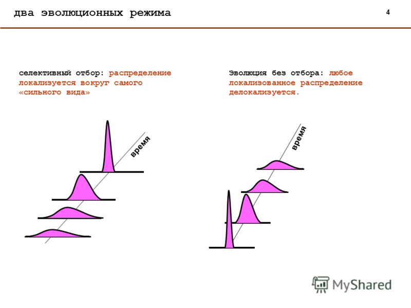 два эволюционных режима селективный отбор: распределение локализуется вокруг самого «сильного вида» время 4 Эволюция без отбора: любое локализованное распределение делокализуется. время
