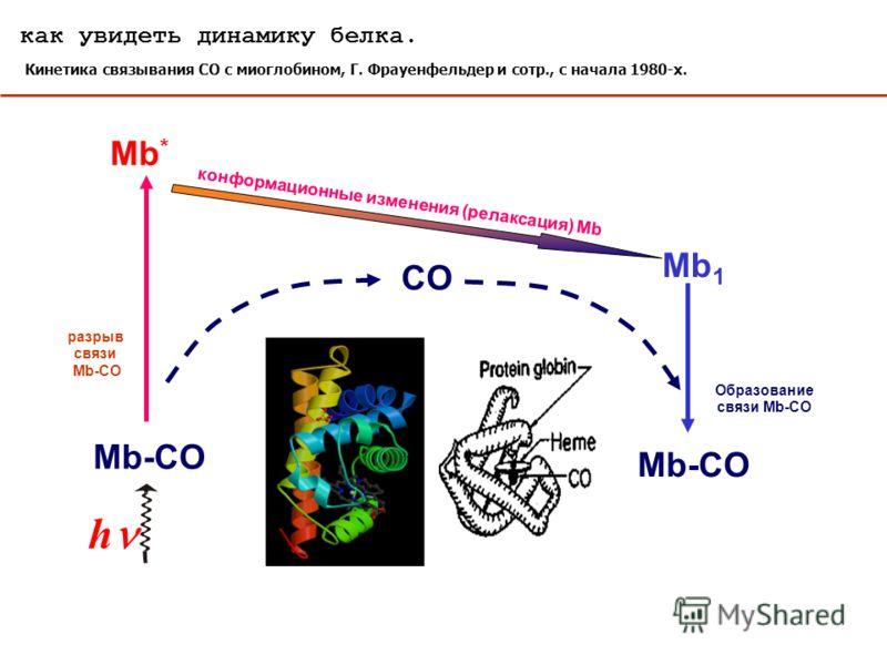 как увидеть динамику белка. Кинетика связывания СО с миоглобином, Г. Фрауенфельдер и сотр., с начала 1980-х. Mb-CO Образование связи Mb-CO h Mb-CO CO разрыв связи Mb-CO Mb * конформационные изменения (релаксация) Mb Mb 1