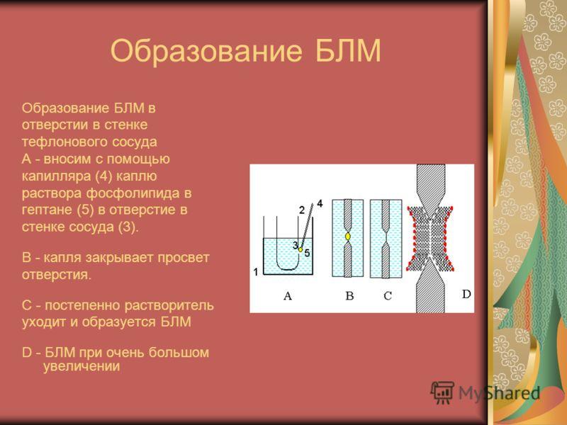 Образование БЛМ Образование БЛМ в отверстии в стенке тефлонового сосуда A - вносим с помощью капилляра (4) каплю раствора фосфолипида в гептане (5) в отверстие в стенке сосуда (3). B - капля закрывает просвет отверстия. C - постепенно растворитель ух