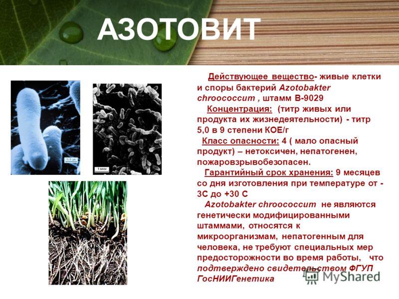 АЗОТОВИТ Действующее вещество- живые клетки и споры бактерий Azotobakter chroococcum, штамм В-9029 Концентрация: (титр живых или продукта их жизнедеятельности) - титр 5,0 в 9 степени КОЕ/г Класс опасности: 4 ( мало опасный продукт) – нетоксичен, непа