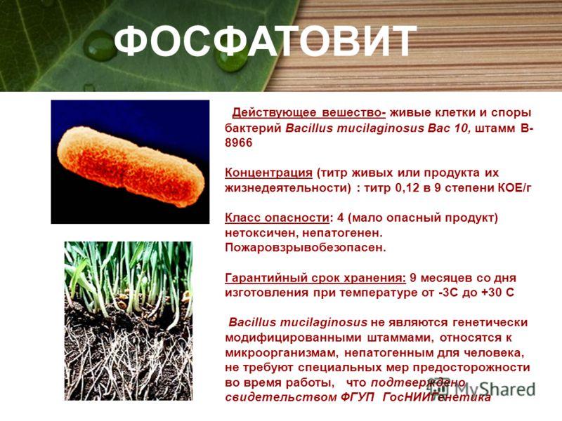 ФОСФАТОВИТ Действующее вешество- живые клетки и споры бактерий Bacillus mucilaginosus Bac 10, штамм В- 8966 Концентрация (титр живых или продукта их жизнедеятельности) : титр 0,12 в 9 степени КОЕ/г Класс опасности: 4 (мало опасный продукт) нетоксичен