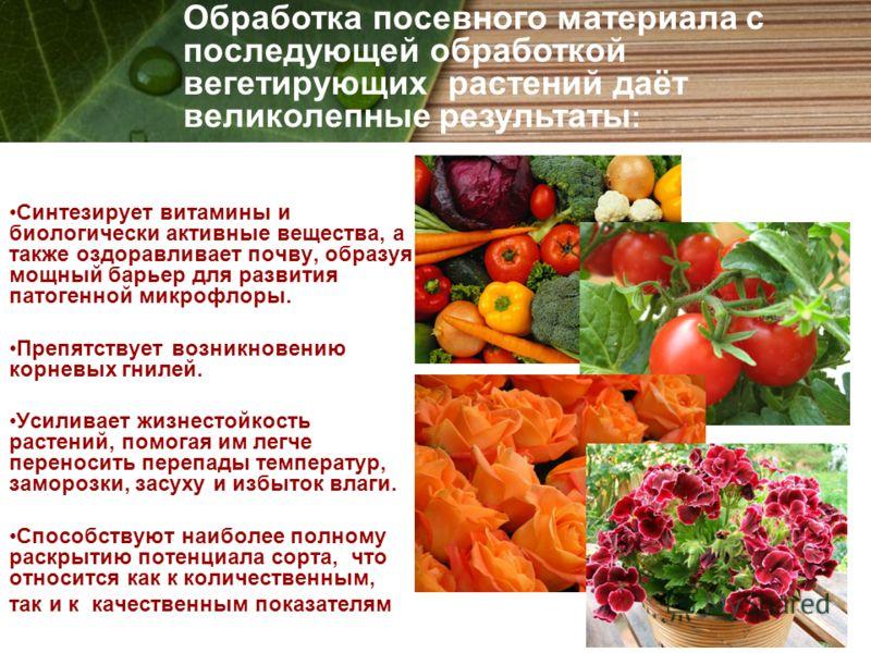 Синтезирует витамины и биологически активные вещества, а также оздоравливает почву, образуя мощный барьер для развития патогенной микрофлоры. Препятствует возникновению корневых гнилей. Усиливает жизнестойкость растений, помогая им легче переносить п