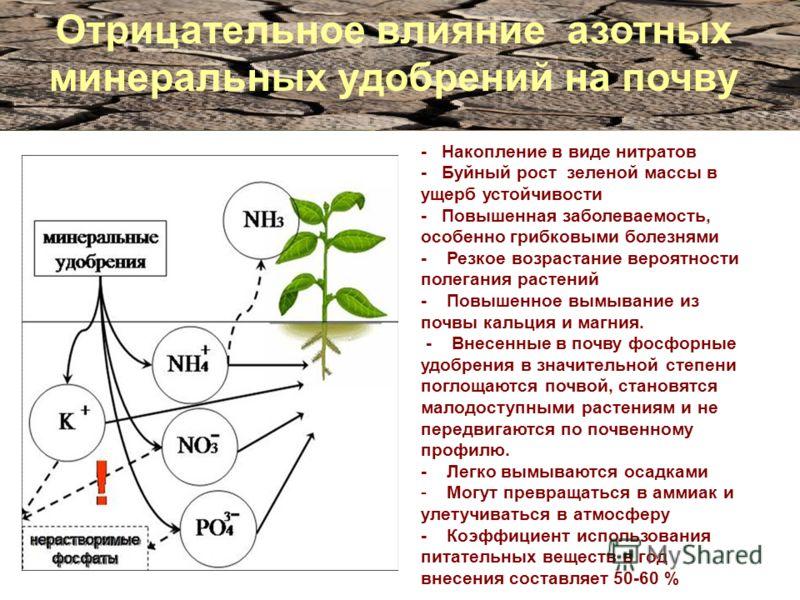 Отрицательное влияние азотных минеральных удобрений на почву - Накопление в виде нитратов - Буйный рост зеленой массы в ущерб устойчивости - Повышенная заболеваемость, особенно грибковыми болезнями - Резкое возрастание вероятности полегания растений