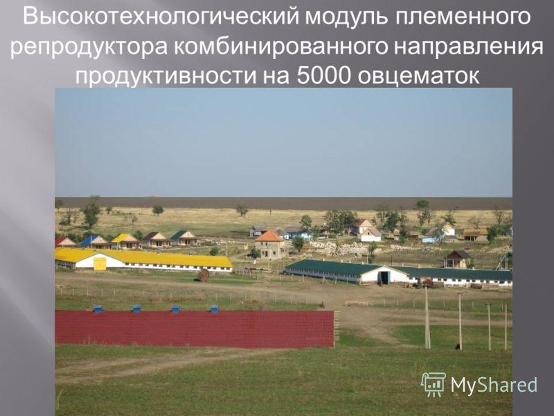 Высокотехнологический модуль племенного репродуктора комбинированного направления продуктивности на 5000 овцематок
