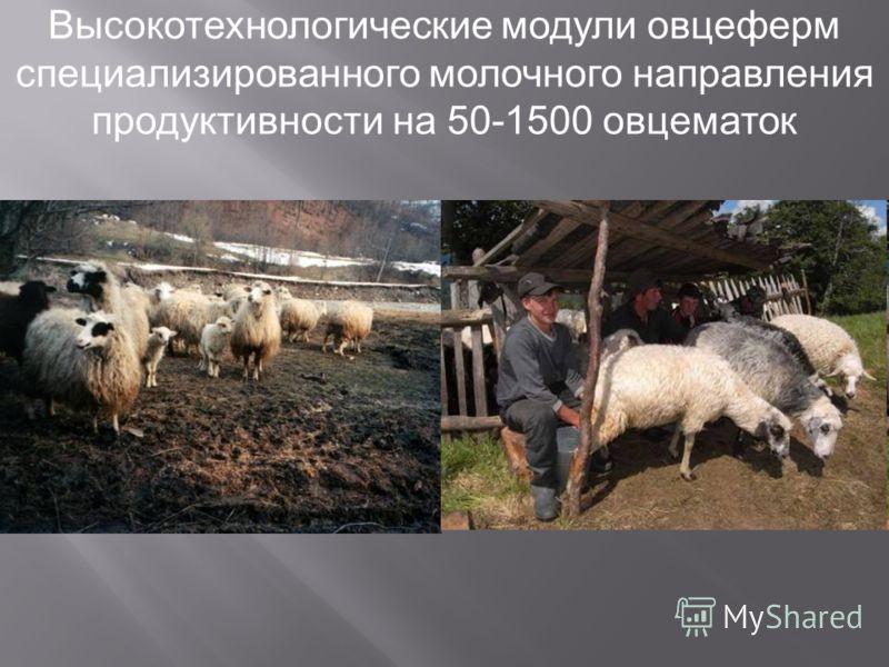 Высокотехнологические модули овцеферм специализированного молочного направления продуктивности на 50-1500 овцематок