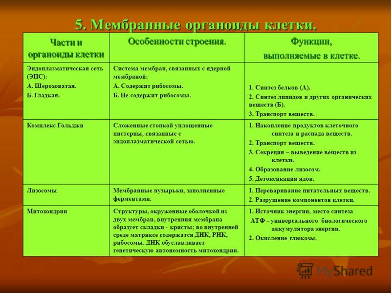 5. Мембранные органоиды клетки. Части и органоиды клетки Особенности строения. Функции, выполняемые в клетке. Эндоплазматическая сеть (ЭПС): А. Шероховатая. Б. Гладкая. Система мембран, связанных с ядерной мембраной: А. Содержит рибосомы. Б. Не содер