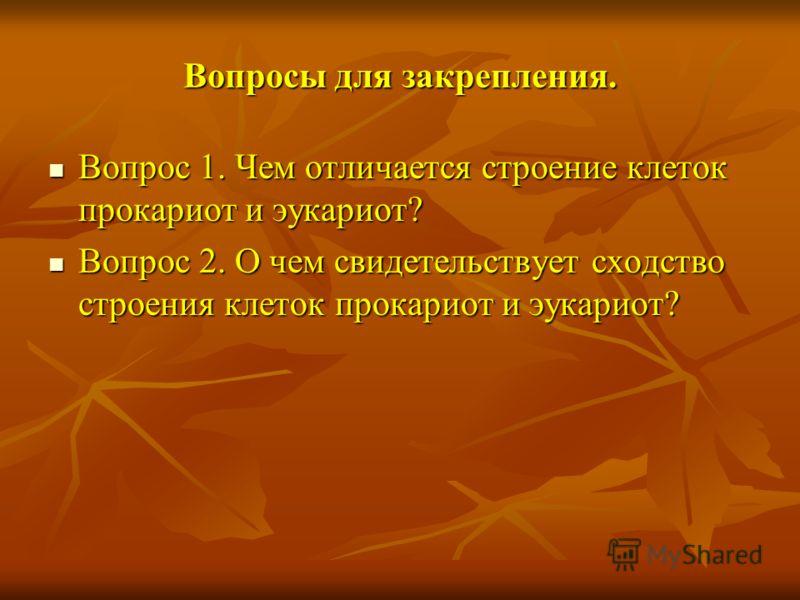 Вопросы для закрепления. Вопрос 1. Чем отличается строение клеток прокариот и эукариот? Вопрос 1. Чем отличается строение клеток прокариот и эукариот? Вопрос 2. О чем свидетельствует сходство строения клеток прокариот и эукариот? Вопрос 2. О чем свид