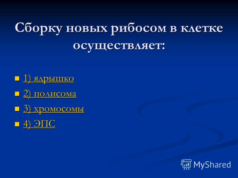 Сборку новых рибосом в клетке осуществляет: 1) ядрышко 1) ядрышко 1) ядрышко 1) ядрышко 2) полисома 2) полисома 2) полисома 2) полисома 3) хромосомы 3) хромосомы 3) хромосомы 3) хромосомы 4) ЭПС 4) ЭПС 4) ЭПС 4) ЭПС