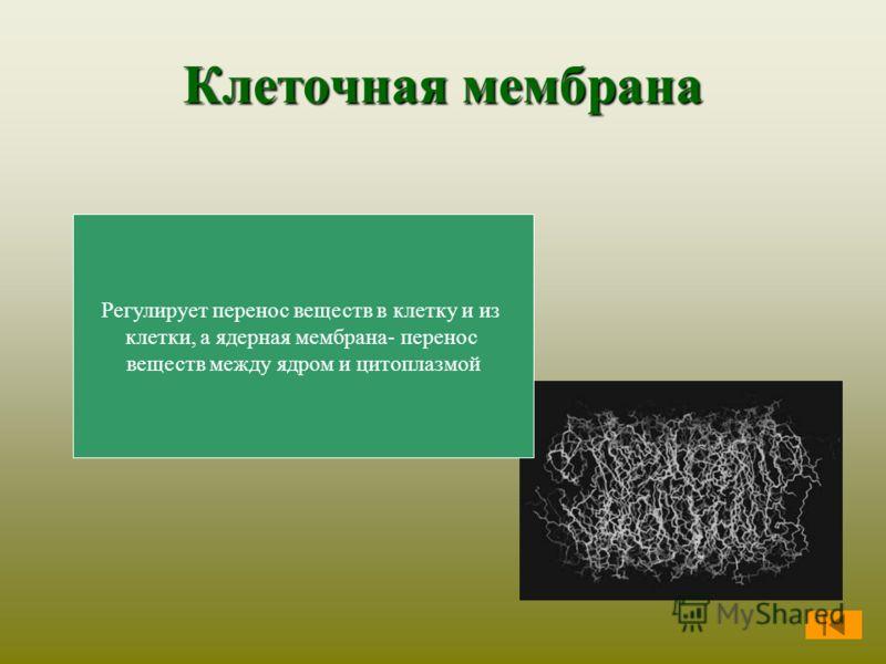Клеточная мембрана Регулирует перенос веществ в клетку и из клетки, а ядерная мембрана- перенос веществ между ядром и цитоплазмой