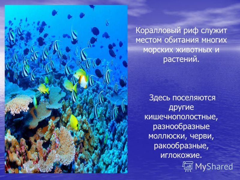 Коралловый риф служит местом обитания многих морских животных и растений. Здесь поселяются другие кишечнополостные, разнообразные моллюски, черви, ракообразные, иглокожие.