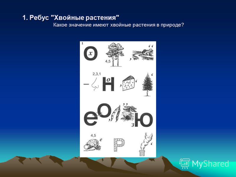 1. Ребус Хвойные растения Какое значение имеют хвойные растения в природе?