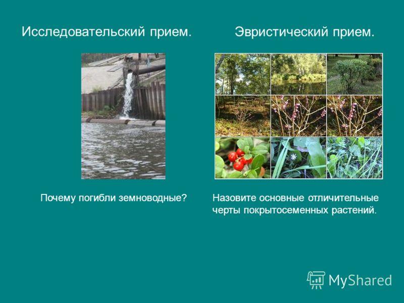 Исследовательский прием. Эвристический прием. Почему погибли земноводные?Назовите основные отличительные черты покрытосеменных растений.