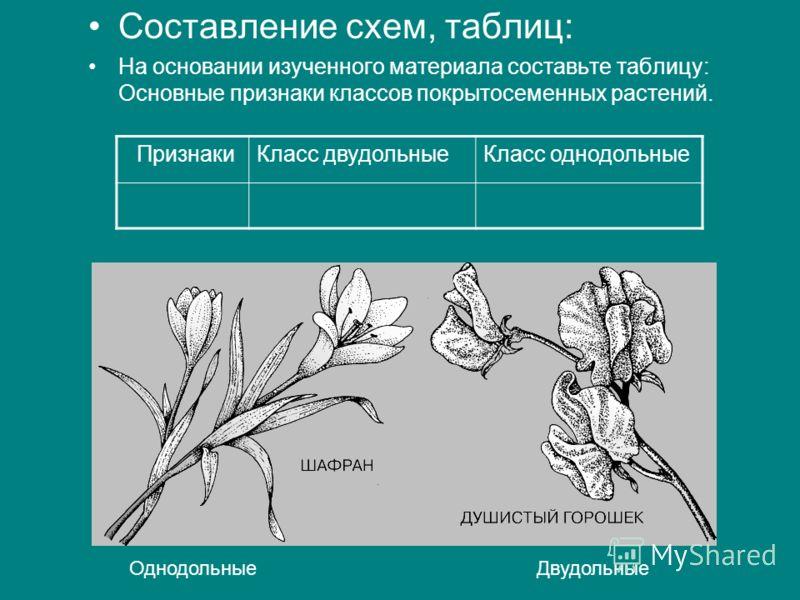 Составление схем, таблиц: На основании изученного материала составьте таблицу: Основные признаки классов покрытосеменных растений. ПризнакиКласс двудольныеКласс однодольные Однодольные Двудольные