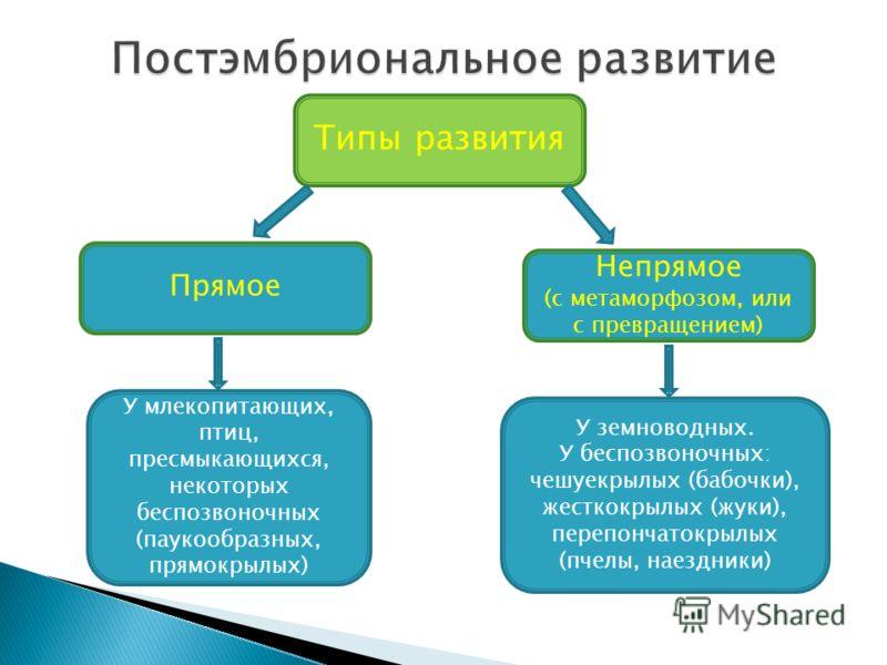 Прямое Типы развития У