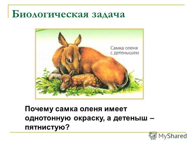 Биологическая задача Почему самка оленя имеет однотонную окраску, а детеныш – пятнистую?