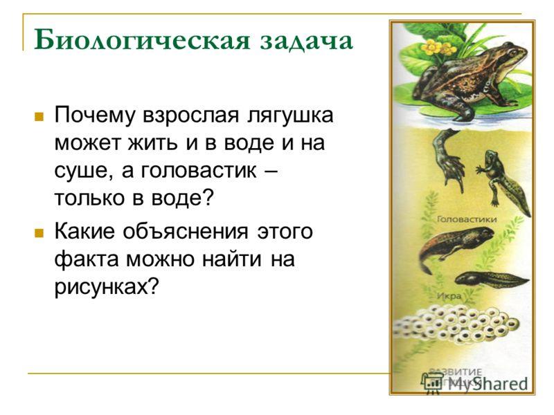 Биологическая задача Почему взрослая лягушка может жить и в воде и на суше, а головастик – только в воде? Какие объяснения этого факта можно найти на рисунках?
