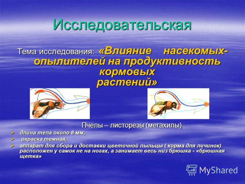 Исследовательская Тема исследования: «Влияние насекомых- опылителей на продуктивность кормовых растений» Пчелы – листорезы (мегахилы) Пчелы – листорезы (мегахилы) длина тела около 8 мм, длина тела около 8 мм, окраска темная, окраска темная, аппарат д