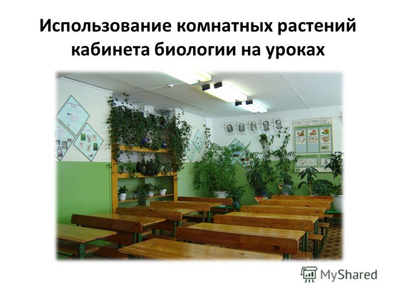 Использование комнатных растений кабинета биологии на уроках