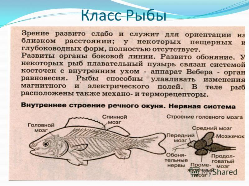 краткий рассказ про рыбалку