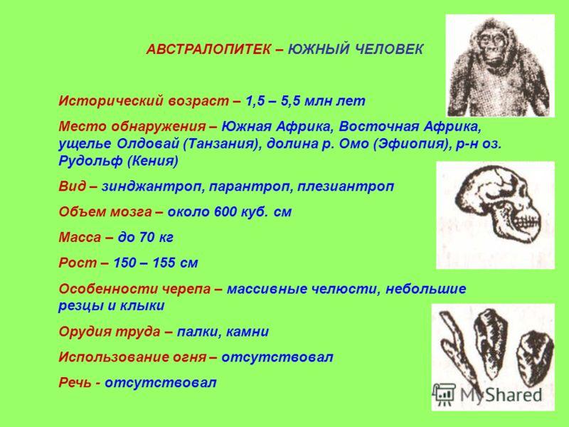АВСТРАЛОПИТЕК – ЮЖНЫЙ ЧЕЛОВЕК Исторический возраст – 1,5 – 5,5 млн лет Место обнаружения – Южная Африка, Восточная Африка, ущелье Олдовай (Танзания), долина р. Омо (Эфиопия), р-н оз. Рудольф (Кения) Вид – зинджантроп, парантроп, плезиантроп Объем моз
