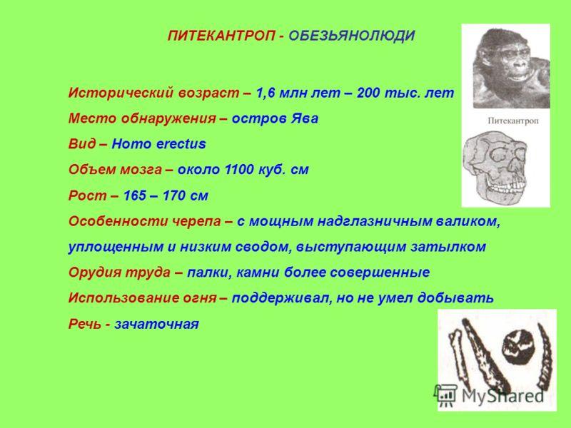ПИТЕКАНТРОП - ОБЕЗЬЯНОЛЮДИ Исторический возраст – 1,6 млн лет – 200 тыс. лет Место обнаружения – остров Ява Вид – Homo erectus Объем мозга – около 1100 куб. см Рост – 165 – 170 см - Особенности черепа – с мощным надглазничным валиком, уплощенным и ни