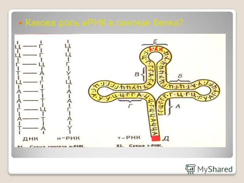 Какова роль иРНК в синтезе белка?