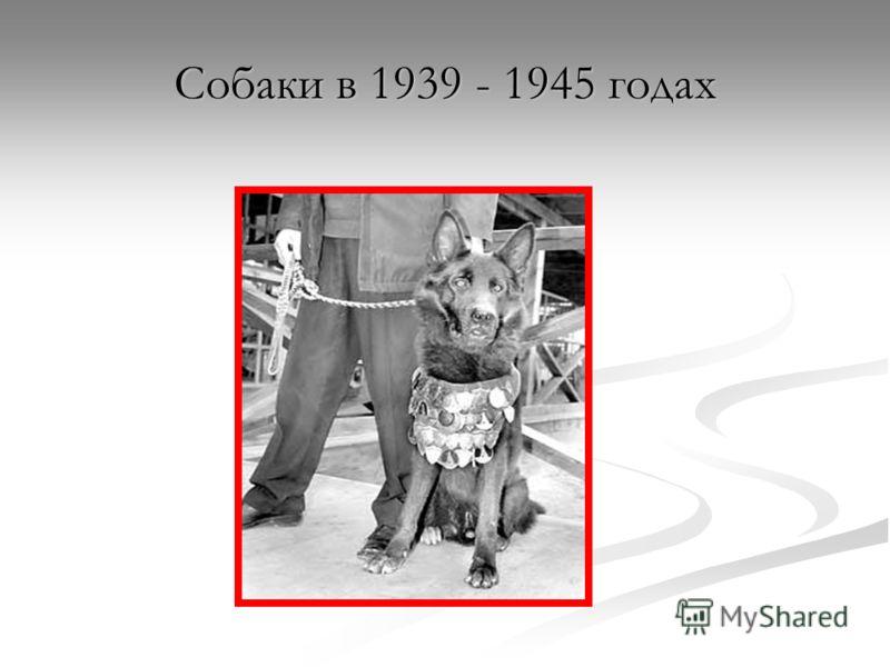 Собаки в 1939 - 1945 годах