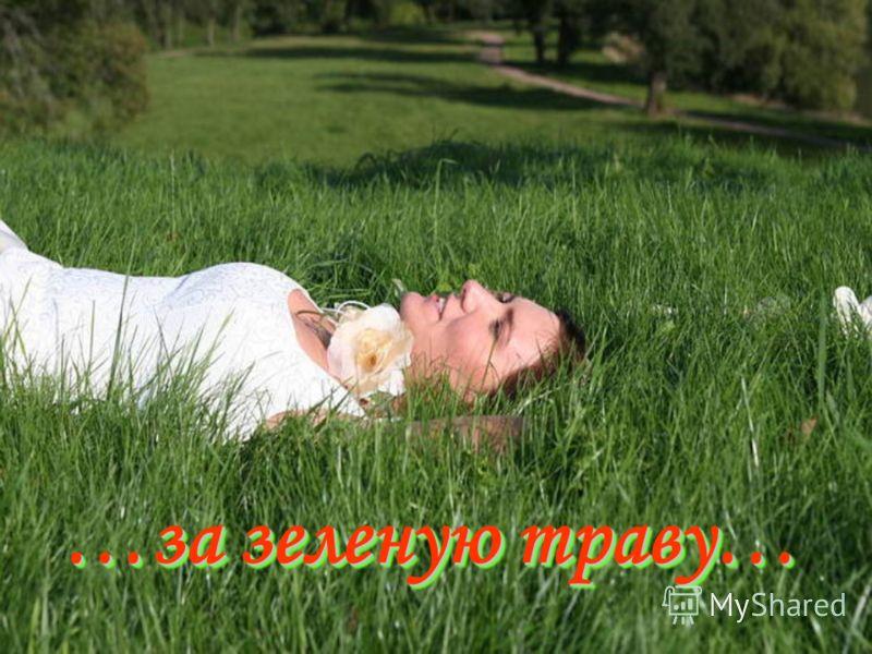 …за зеленую траву… …за зеленую траву…