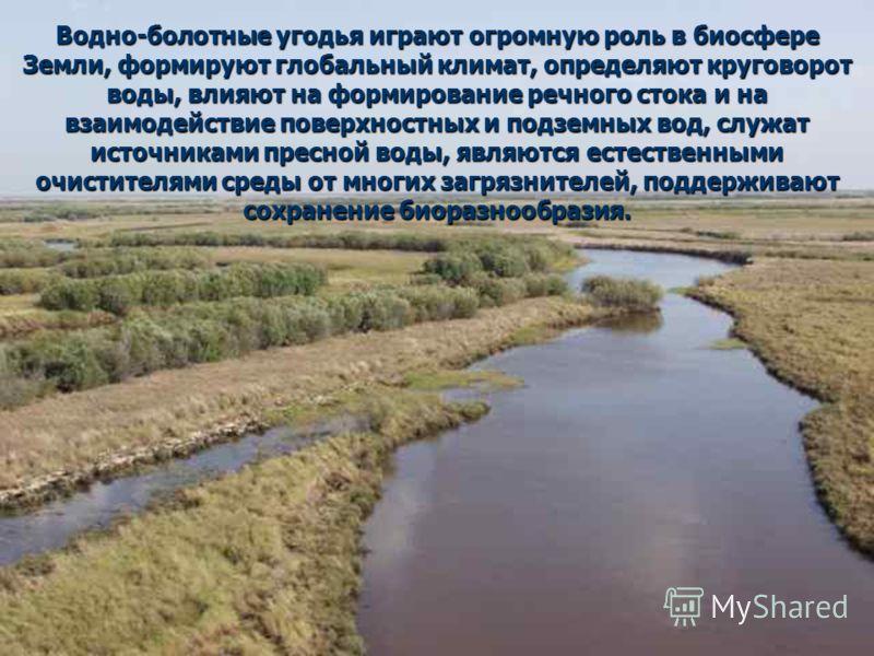 Водно-болотные угодья играют огромную роль в биосфере Земли, формируют глобальный климат, определяют круговорот воды, влияют на формирование речного стока и на взаимодействие поверхностных и подземных вод, служат источниками пресной воды, являются ес