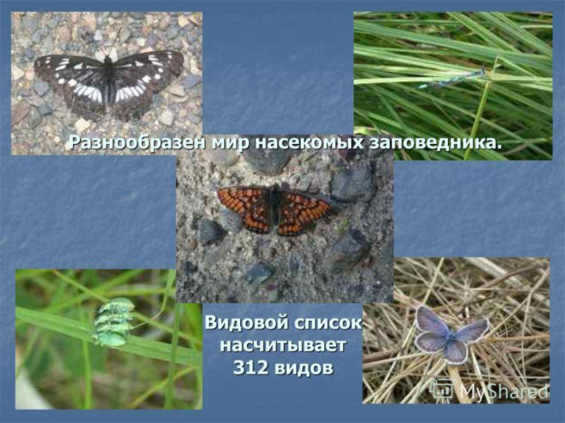 Разнообразен мир насекомых заповедника. Видовой список насчитывает 312 видов Разнообразен мир насекомых заповедника. Видовой список насчитывает 312 видов