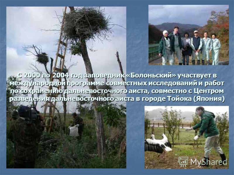 С 2000 по 2004 год заповедник «Болоньский» участвует в международной программе совместных исследований и работ по сохранению дальневосточного аиста, совместно с Центром разведения дальневосточного аиста в городе Тойока (Япония)