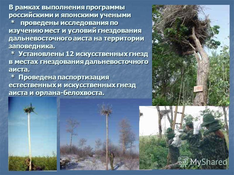 В рамках выполнения программы российскими и японскими учеными * проведены исследования по изучению мест и условий гнездования дальневосточного аиста на территории заповедника. * Установлены 12 искусственных гнезд в местах гнездования дальневосточного