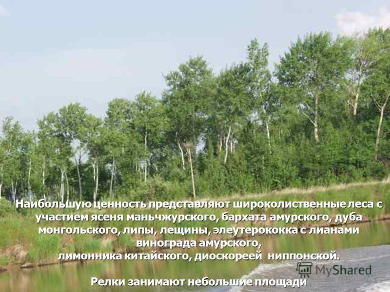 Наибольшую ценность представляют широколиственные леса с участием ясеня маньчжурского, бархата амурского, дуба монгольского, липы, лещины, элеутерококка с лианами винограда амурского, лимонника китайского, диоскореей ниппонской. Релки занимают неболь