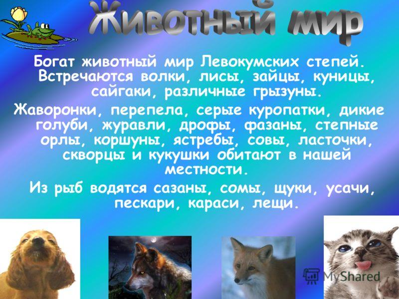 Богат животный мир Левокумских степей. Встречаются волки, лисы, зайцы, куницы, сайгаки, различные грызуны. Жаворонки, перепела, серые куропатки, дикие голуби, журавли, дрофы, фазаны, степные орлы, коршуны, ястребы, совы, ласточки, скворцы и кукушки о