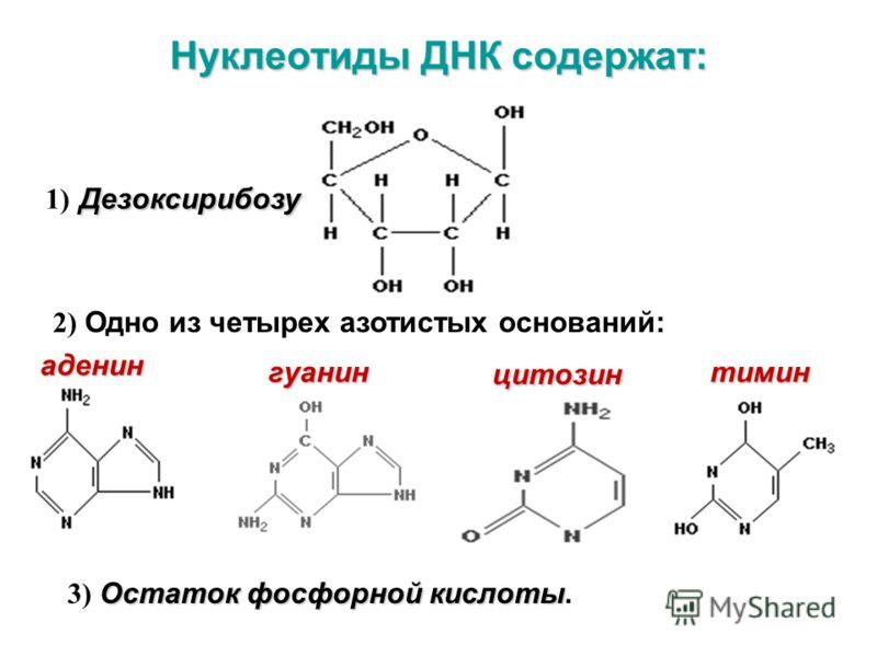 Нуклеотиды ДНК содержат: Дезоксирибозу 1) Дезоксирибозу 2) Одно из четырех азотистых оснований: Остаток фосфорной кислоты 3) Остаток фосфорной кислоты. аденин гуанинтимин цитозин