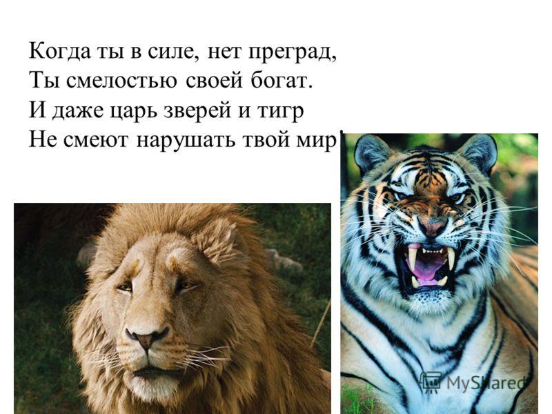Когда ты в силе, нет преград, Ты смелостью своей богат. И даже царь зверей и тигр Не смеют нарушать твой мир!