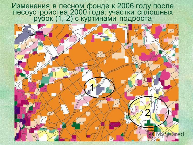 Изменения в лесном фонде к 2006 году после лесоустройства 2000 года: участки сплошных рубок (1, 2) с куртинами подроста