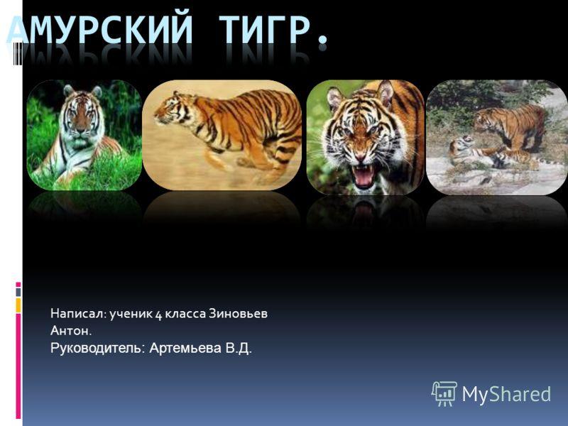 Написал: ученик 4 класса Зиновьев Антон. Руководитель: Артемьева В.Д.