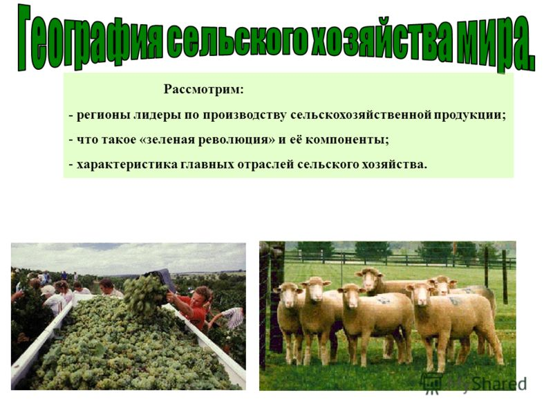 Рассмотрим: - регионы лидеры по производству сельскохозяйственной продукции; - что такое «зеленая революция» и её компоненты; - характеристика главных отраслей сельского хозяйства.