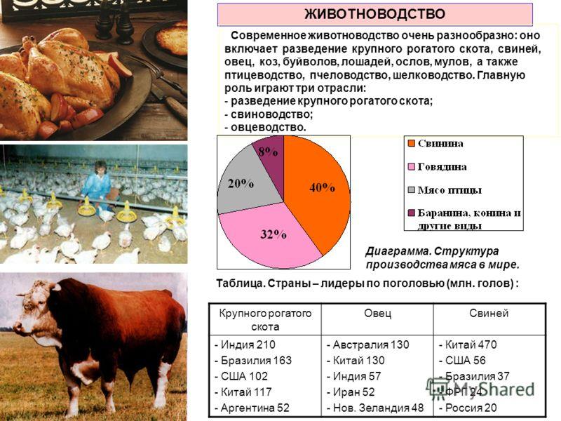 ЖИВОТНОВОДСТВО Современное животноводство очень разнообразно: оно включает разведение крупного рогатого скота, свиней, овец, коз, буйволов, лошадей, ослов, мулов, а также птицеводство, пчеловодство, шелководство. Главную роль играют три отрасли: - ра