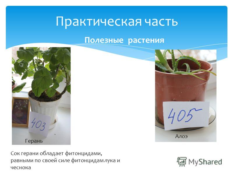 Практическая часть Полезные растения Герань Сок герани обладает фитонцидами, равными по своей силе фитонцидам лука и чеснока Алоэ