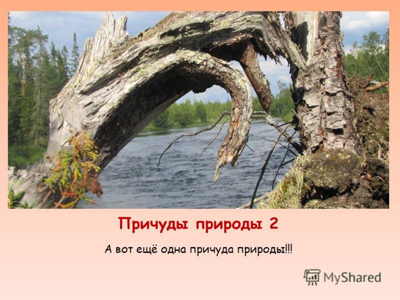 Причуды природы 2 А вот ещё одна причуда природы!!!